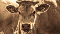 Reducetarianesimo, meno carne per vivere meglio