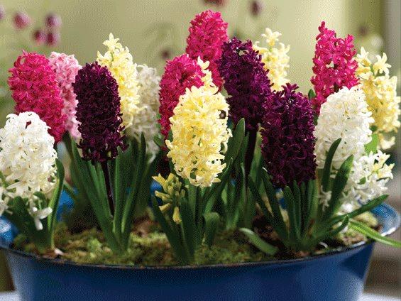 Fiori di primavera for Fiori primaverili da giardino