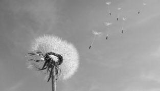 Allergia ai pollini: sintomi e precauzioni