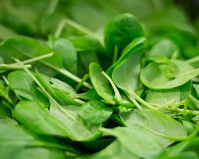 Ricette con spinaci per la tavola di primavera