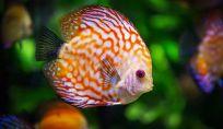 Pesci: caratteristiche dell'ultimo segno dello zodiaco