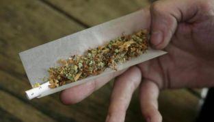 Legalizzazione cannabis: 218 parlamentari per il sì