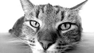 Rimanere svegli senza caffè? Ci sono i video virali dei gattini