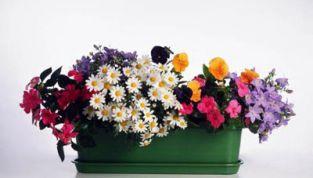Piante primaverili: giardini e balconi... in fiore!