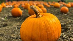 Idee per riciclare la zucca di Halloween