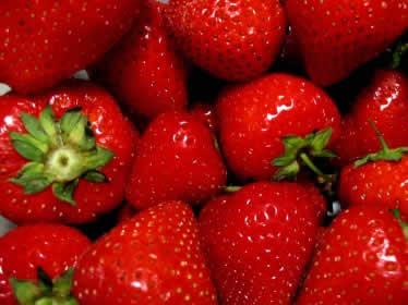 Fragole gustoso frutto di stagione ricco di vitamina c for Pianta fragole