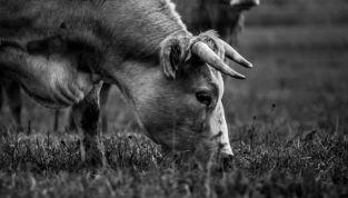 Toro, il primo segno di terra dello zodiaco
