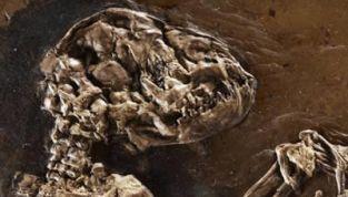 Ida, il fossile di 47 milioni di anni