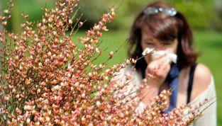 Pollini, cause e rimedi naturali per alleviarne gli effetti