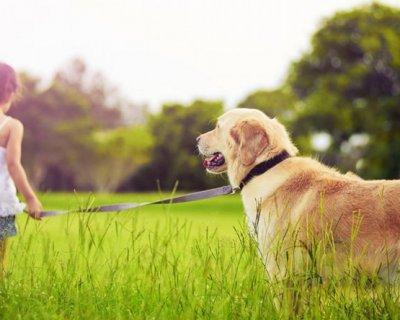 Un cane all'asilo nido: Bologna introduce la pet education