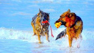 Al mare con il cane: 7 consigli utili