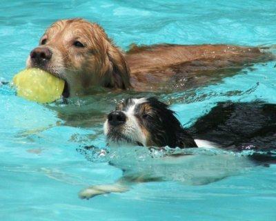 Come insegnare al vostro cane a nuotare
