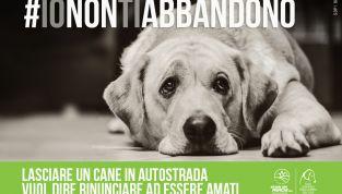 #Ionontiabbandono: la campagna contro l'abbandono degli animali
