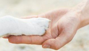 La cremazione degli animali: in cosa consiste?
