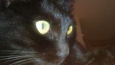 W il gatto nero!