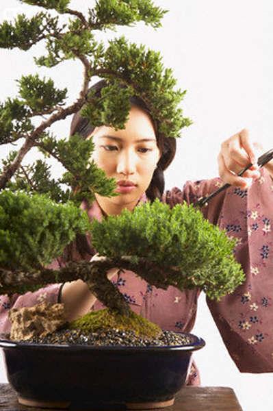 Bonsai - Cura dei bonsai in casa ...