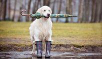 4 Motivi per portare fuori il cane in inverno