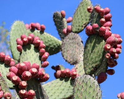 Nopal, una verdura messicana