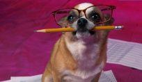 Animali domestici stressati: cause e rimedi