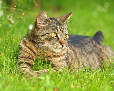 Come aiutare il gatto ad affrontare il caldo