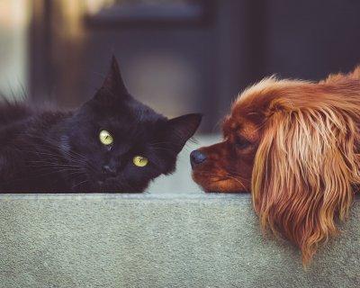 Come insegnare a cane e gatto a convivere pacificamente