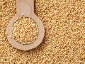 Latte di amaranto, benefici e ricetta