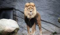 Segno zodiacale del leone: tutte le caratteristiche del segno