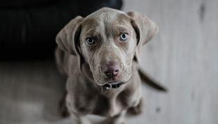 26 agosto: giornata mondiale del cane