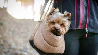 Viaggiare in aereo con animali: tutto quello che c'è da sapere