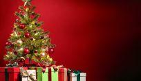 Come scegliere l'albero di Natale per la propria casa. I nostri consigli