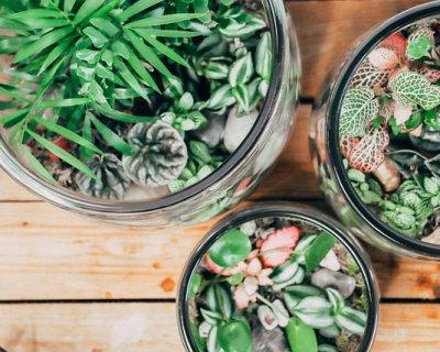 Ami le piante ma hai poco spazio? I terrarium sono la soluzione ideale per avere del verde in casa