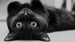 Gatto: animale tra il magico e l'oscuro