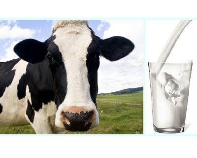 Latte pro e contro
