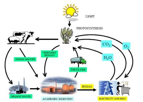 Come si forma il biogas