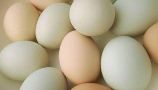 Etichette uova: importanti informazioni per il consumatore