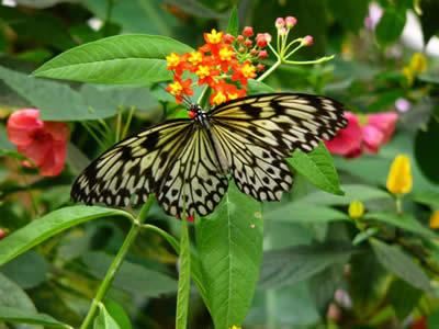 Piante che attirano farfalle