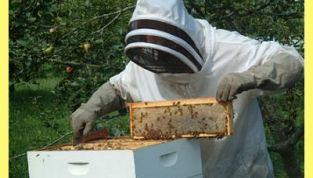Allevare le api