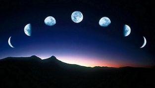 Influenze della Luna sulle piante