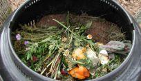 Compost casalingo: 15 cose domestiche da compostare