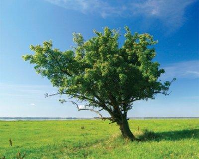 Oroscopo celtico degli alberi (seconda parte)