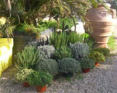 Piante aromatiche: come coltivarle e usarle in cucina