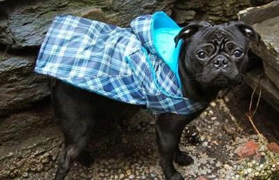 Riutilizzo ombrelli: fare un impermiabile per il cane