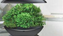 Giardini domestici: come crearli in casa?