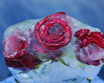Decorazione di fiori sotto ghiaccio