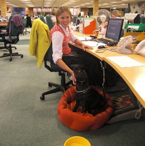 Il cane in ufficio è un ottimo antistress