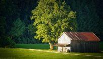 Wwoof: vacanze estive in fattoria