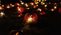 Decorazioni di Halloween fai da te