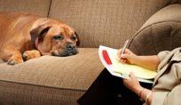Psicologo per cani: quando serve un aiuto anche ai nostri animali domestici