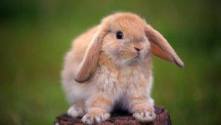 """Stop ai test sugli animali: finalmente """"liberi dalla crudeltà"""""""