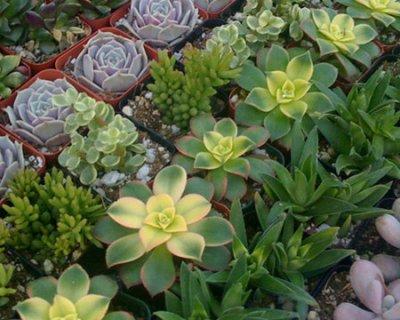 Piante succulente giugno il mese dedicato a queste - Le piante grasse si possono tenere in casa ...